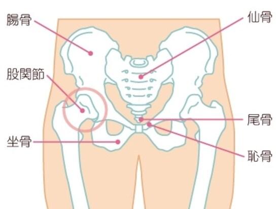 女性の骨盤イメージ