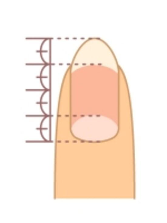 爪根元の白い部分と爪先の白い部分それぞれが、全体の4分の1程度だと美しい長さだと言えます