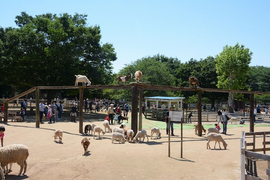成田ゆめ牧場内は動物がいっぱい