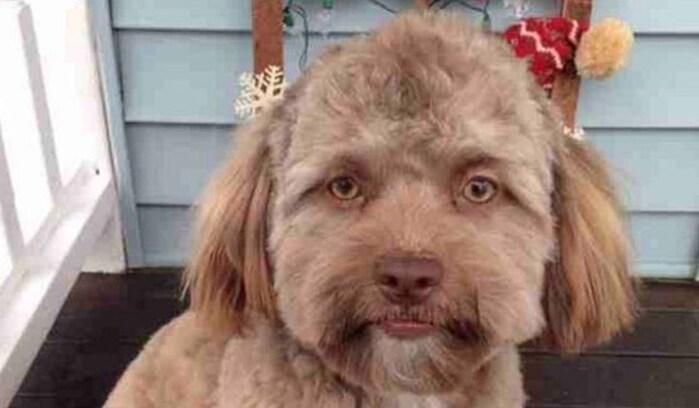 キモかわいい! 「人間」すぎる人面犬にネットが大騒ぎ