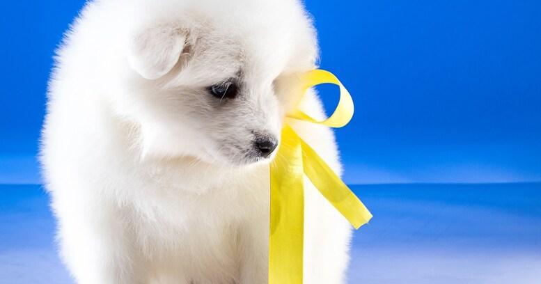 【SNSで話題】なぜ? リードに黄色いリボンをつけている犬を見かけたら近づいちゃダメ