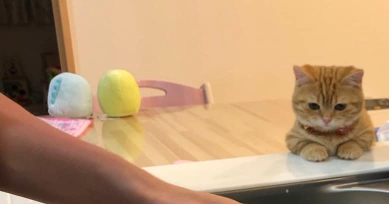 """「洗い物が苦にならぬ」可愛すぎる """"洗い物をじっと見つめる猫"""" の写真に悶絶する人続出!!"""