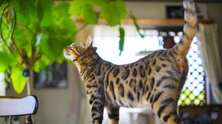 【注意喚起】ユリ科植物は絶対に部屋に置かないで! ネコの飼い主へ…現役獣医の訴えが話題に
