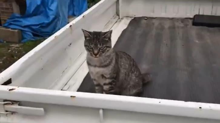 スゴい目つきで睨んでくる猫 その後のツンデレ対応に癒される人続出