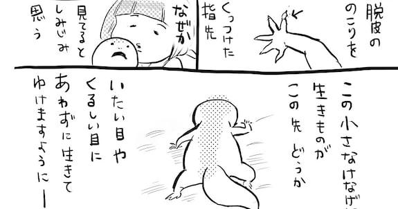 【衝撃】「生きてあと4,5年かな…」小さくてトロすぎるトカゲの寿命を調べてみた結果
