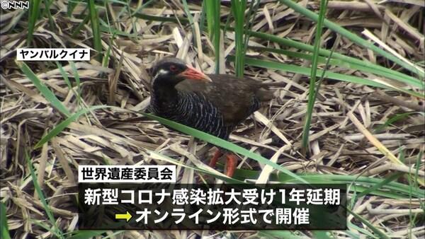 奄美などユネスコ「世界自然遺産」登録決定