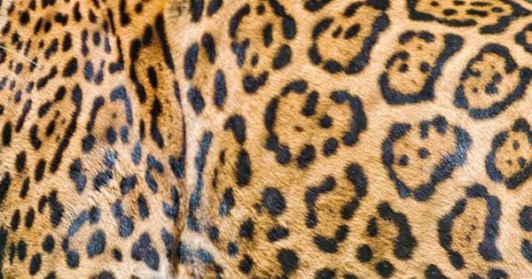 jaguar_01