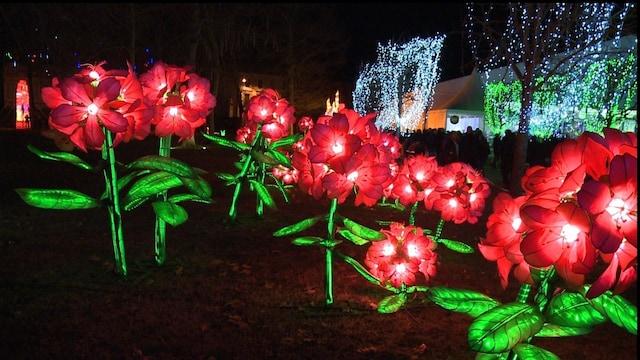 色鮮やかな光の世界、中国伝統の「ランタン・フェスティバル」 仏