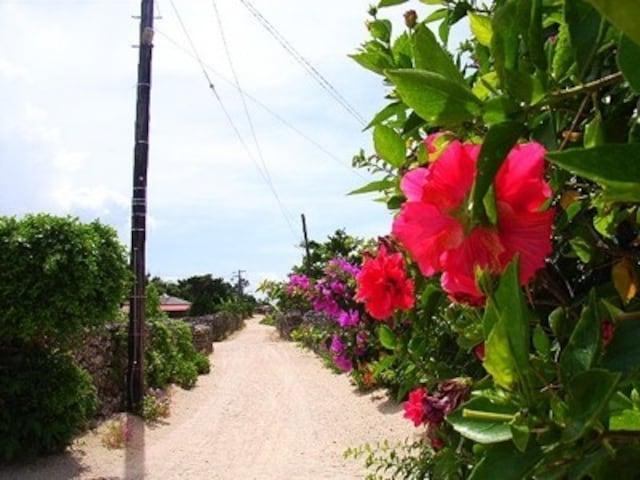 沖縄の原風景に出会える、竹富島