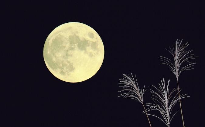 お月見・十五夜の過ごし方、楽しみ方