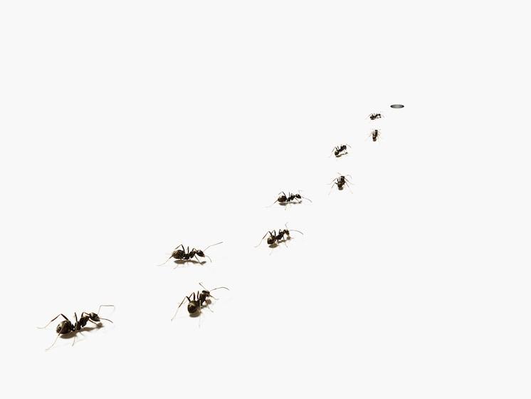 「働かないアリ」のおかげで、アリの社会が長く存続できるワケ