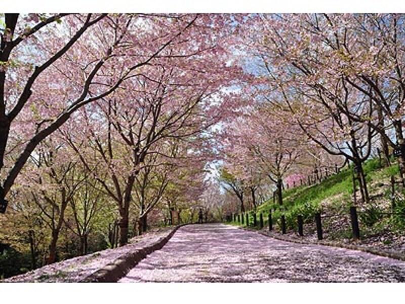 名古屋のお花見スポット2018!桜の名所8選