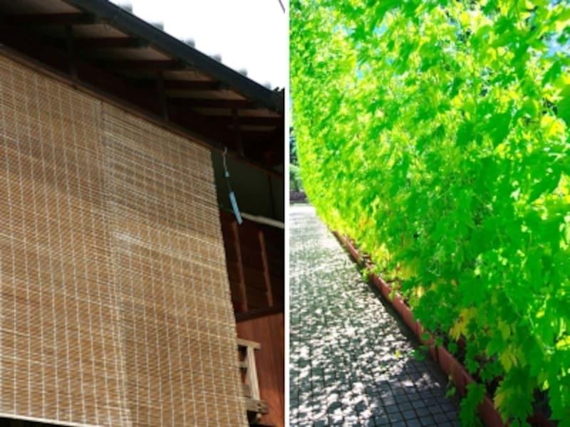 スダレや緑のカーテンは台風前に片付けを