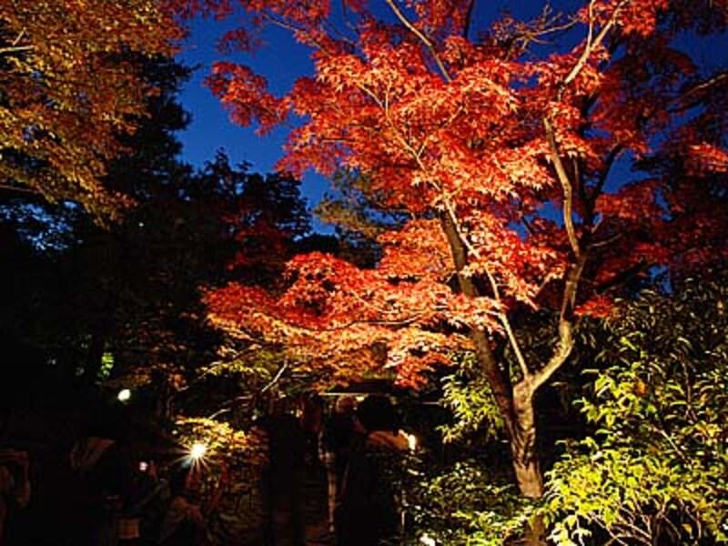 名古屋のおすすめ紅葉ライトアップ情報【2017年版】