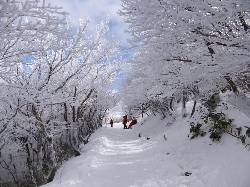 夢のような樹氷に包まれる御在所岳へ/三重