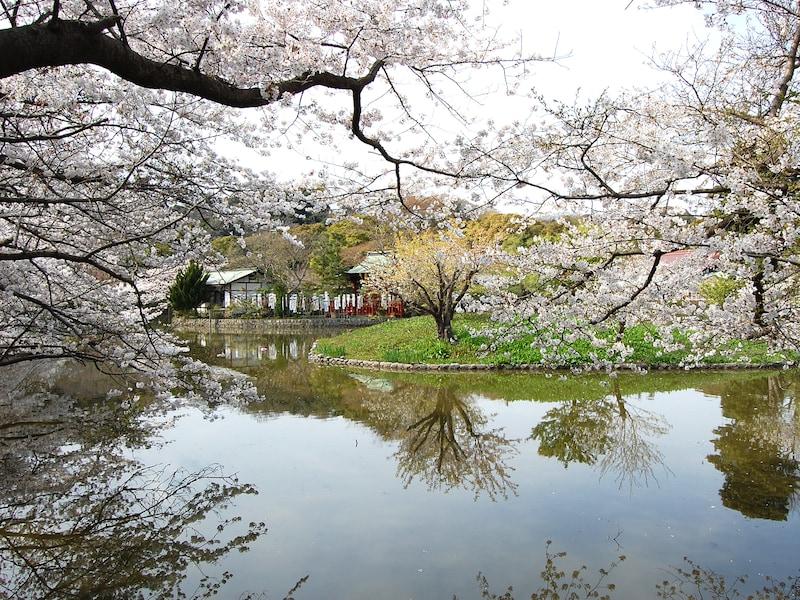 お花見は鎌倉で!鎌倉のオススメ桜の名所 ベスト10