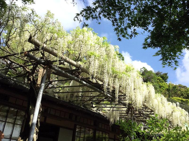 ゴールデンウィークと5月の鎌倉の見所10選【2019年版】