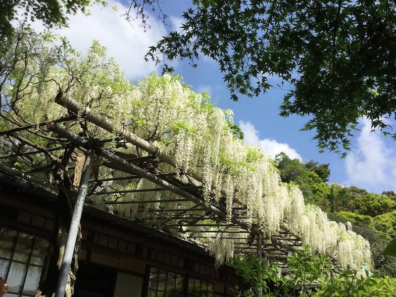 ゴールデンウィークと5月の鎌倉の見所【2018年版】