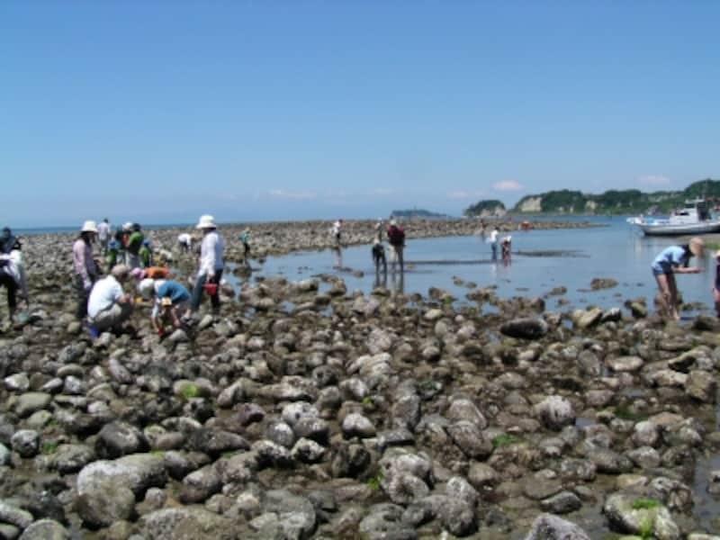 たくさんの丸石による磯が出現した和賀江島