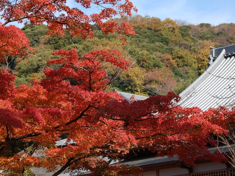 桜と紅葉も!鎌倉五山めぐりは、「鎌倉らしさ」を味わえる散歩道