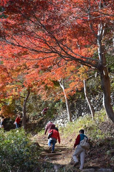 埼玉・飯能は紅葉の宝庫!おすすめ絶景スポット5つ