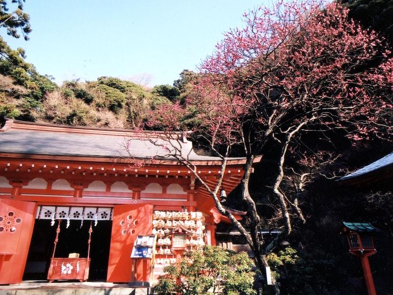 鎌倉・早咲きの梅と瑞泉寺のスイセンを訪ねて