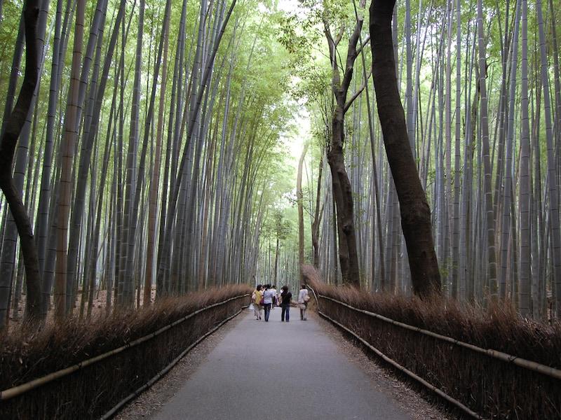はじめての京都一人旅 歩き方入門