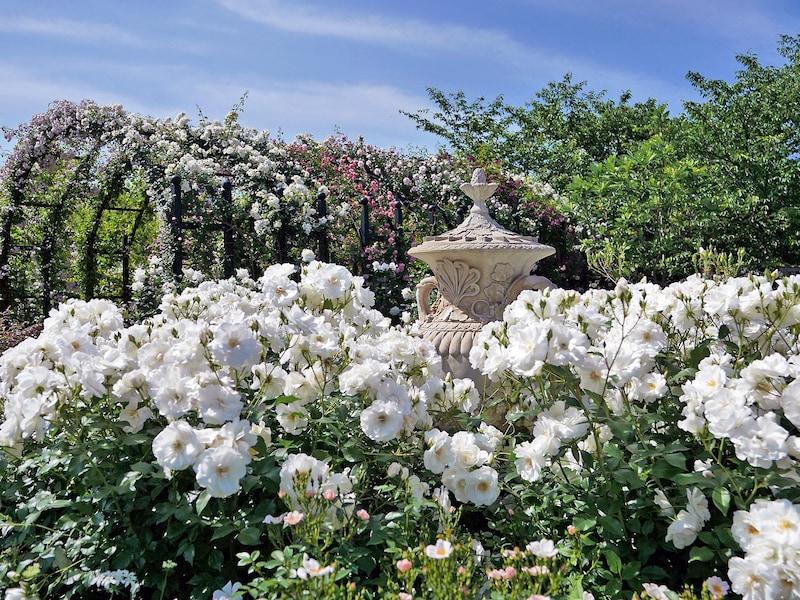 横浜イングリッシュガーデンで横浜市の花・バラを堪能