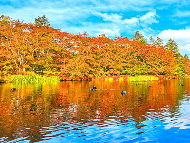 軽井沢で紅葉狩り!温泉も食事も、欲張りモデルコース