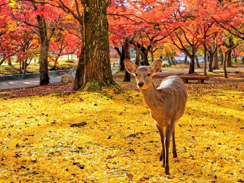 西日本のおすすめ紅葉名所13選!関西から九州まで