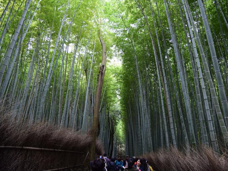 京都 嵐山・嵯峨野へ!竹林の道周辺の名所散歩
