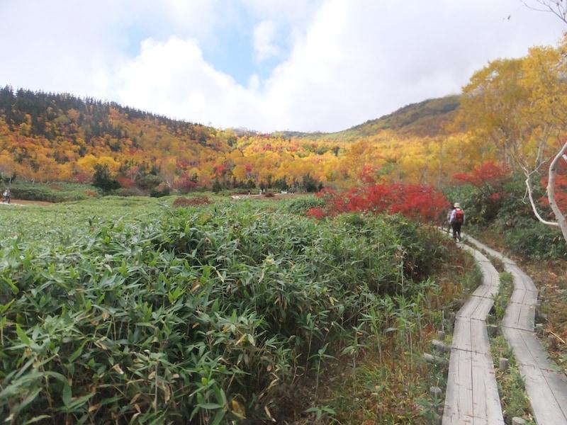 栂池自然園・天空のハイキングでカラフルな紅葉を満喫