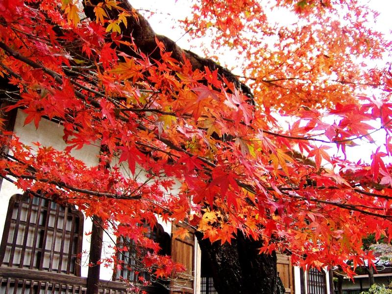 北鎌倉の紅葉散歩2017 名所や穴場はんなり散策コース