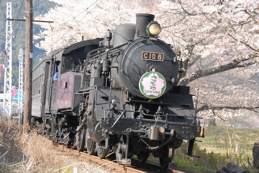 大井川鐵道で絶景の桜を見に行こう!家山の桜トンネル