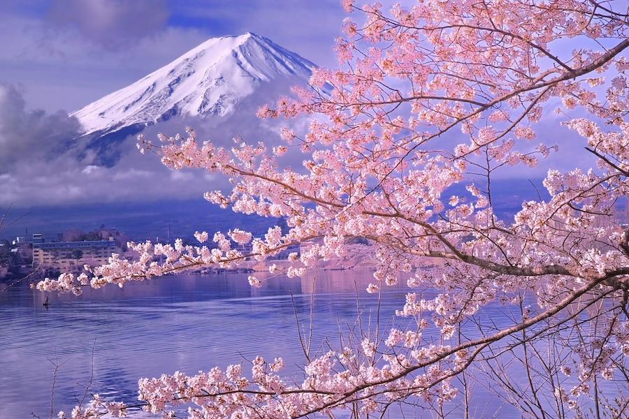 富士山と桜の競演!河口湖周辺のお花見スポット2018