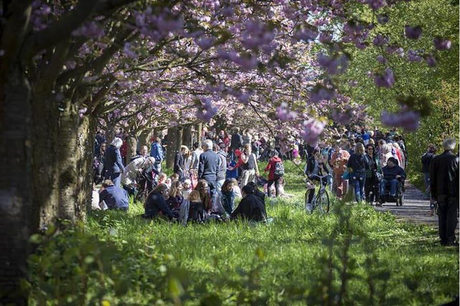 お花見は世界共通の文化!?海外の桜名所と楽しみ方