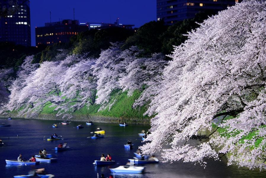 今夜行ける!東京のおすすめ夜桜イベント3選【2018】