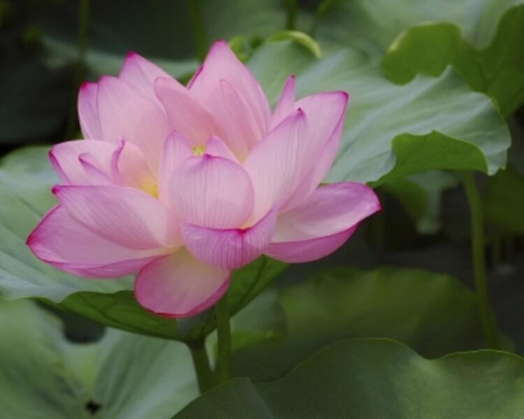 仏教の教えで救われる