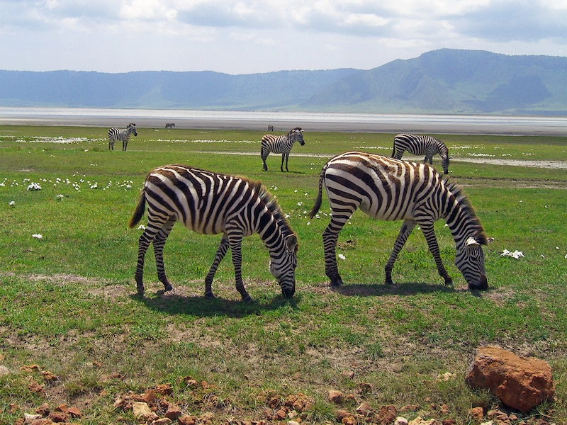 ンゴロンゴロ:マサイ族が暮らすクレーター動物園