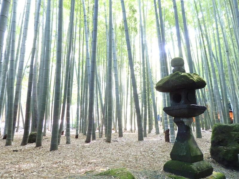 報国寺の竹林散策~歴史や御朱印、お抹茶を楽しむ