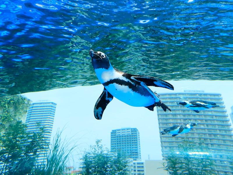 東京5大水族館~魅力がわかる5つのポイント