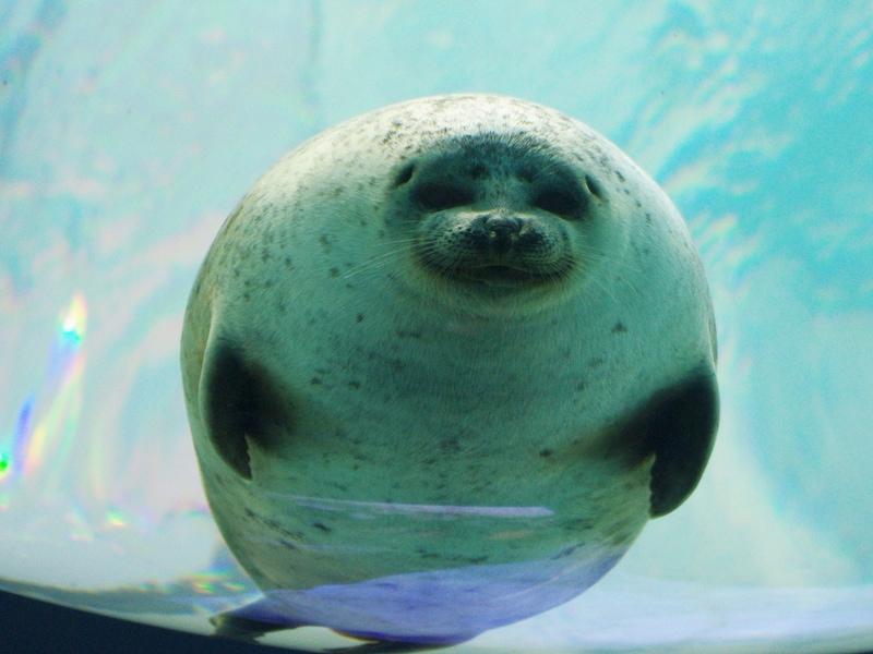 日本の水族館ベスト20~アイドル水槽型と演出体験型