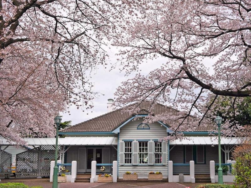 横浜・山手公園でしっとりとお花見を