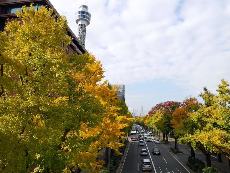 横浜の紅葉2019年!人気スポットの見頃や楽しみ方