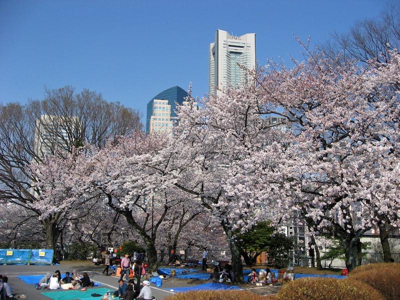 スイーツや動物園…横浜で「サクラ+α」の花見コース
