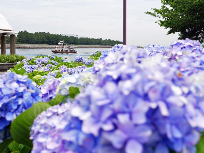 横浜の絶景アジサイ名所5選 2018年の見ごろは?