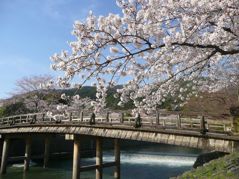 京都で桜を見るならココ!京都の桜の名所&開花時期予想2016