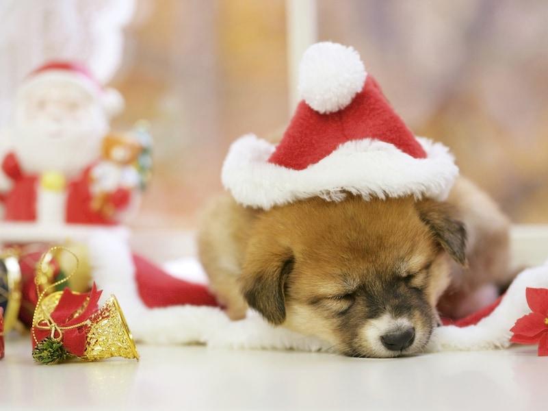 サンタが赤い服を着ているのはなぜ?クリスマス豆知識