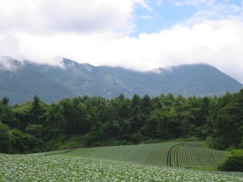 北軽井沢を観光! 大自然を満喫できるおすすめスポット10選