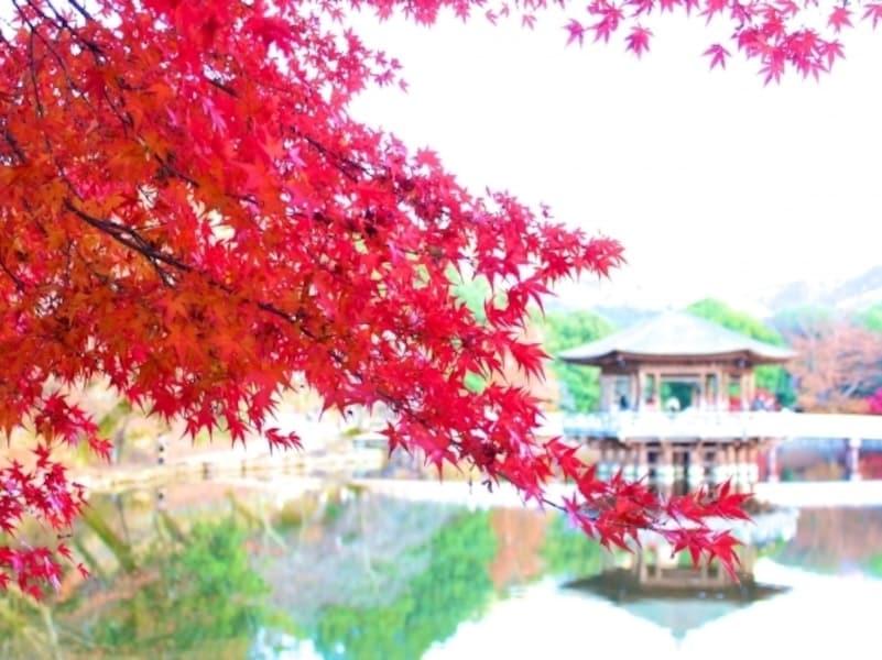 奈良の紅葉2018!おすすめ名所や見頃時期、ライトアップ情報